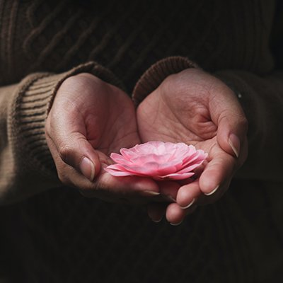 Pink flower in hands