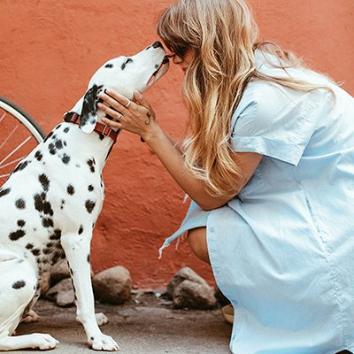 A Dalmatian dog gives a kiss on the nose to a woman